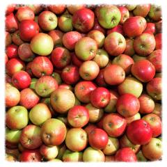 Apples Moat Farm Suffolk